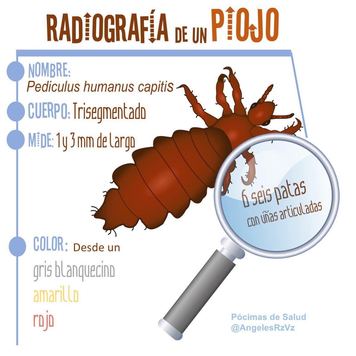 Radiografía de un piojo. Curiosidades