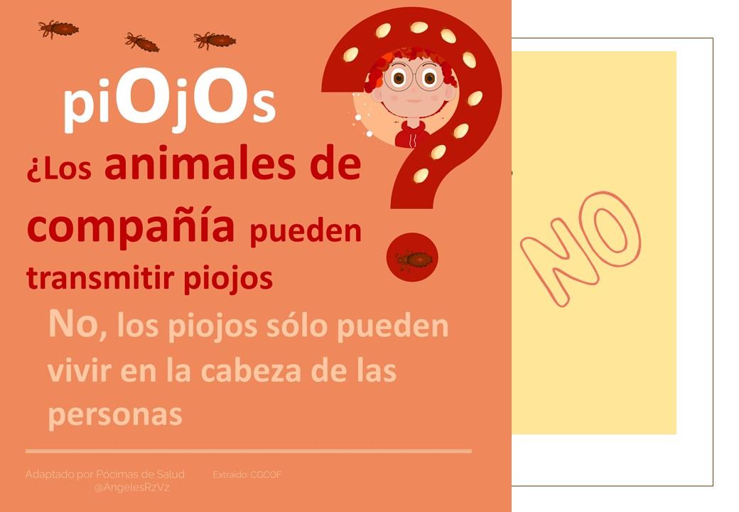 Los animales de compañía ¿pueden transmitir los piojos?