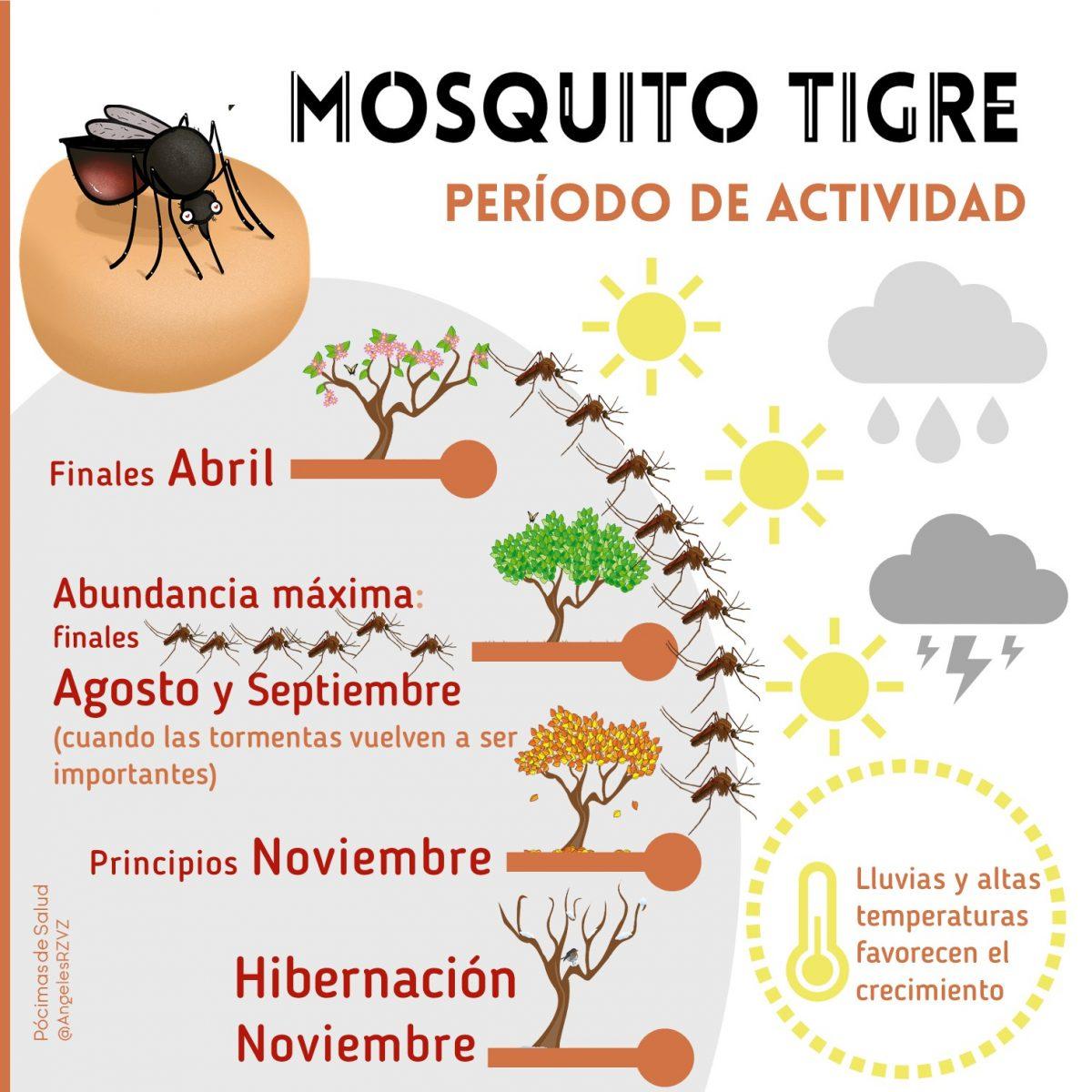 periodo-actividad-mosquito-tigre