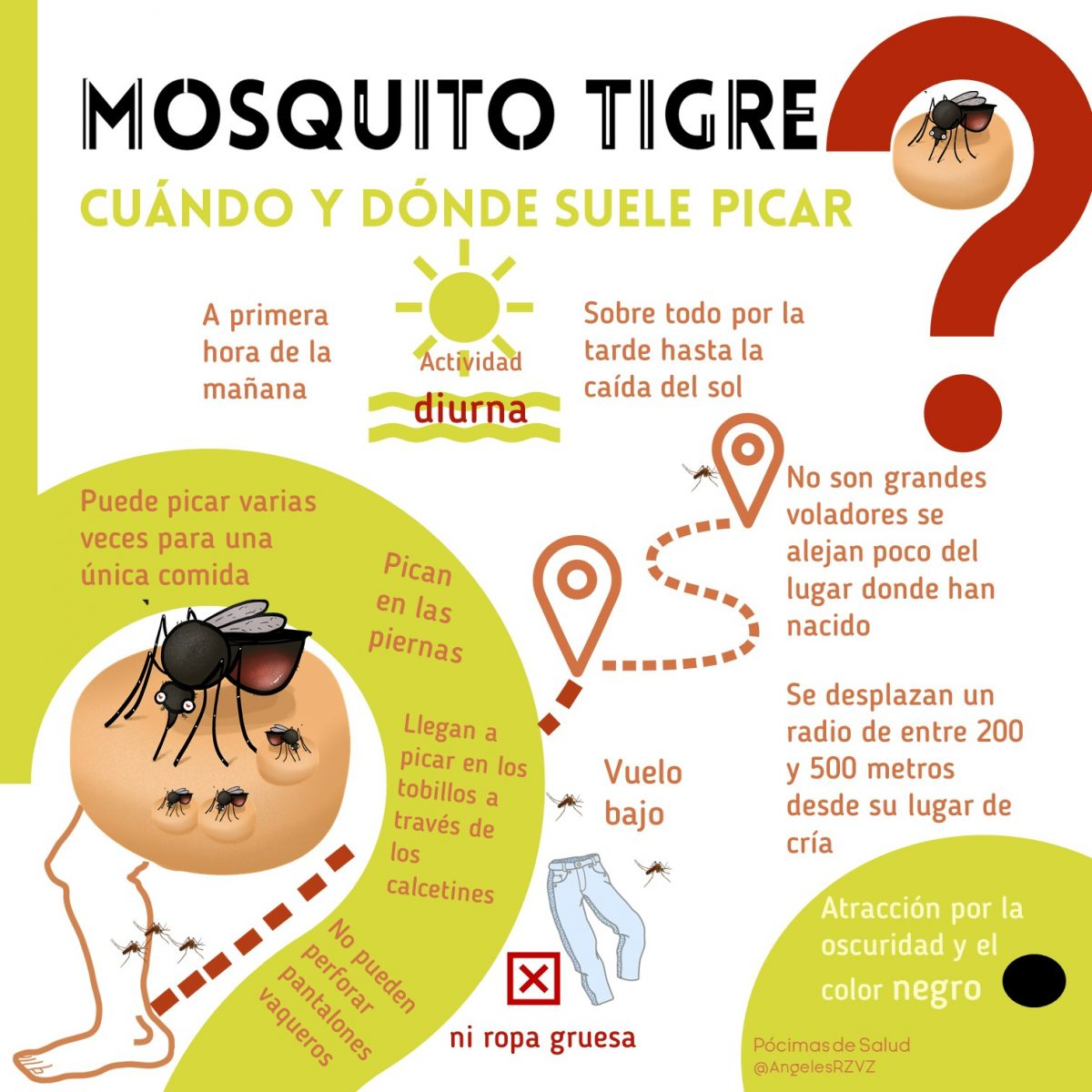 Mosquito-tigre-cuando-donde-pica